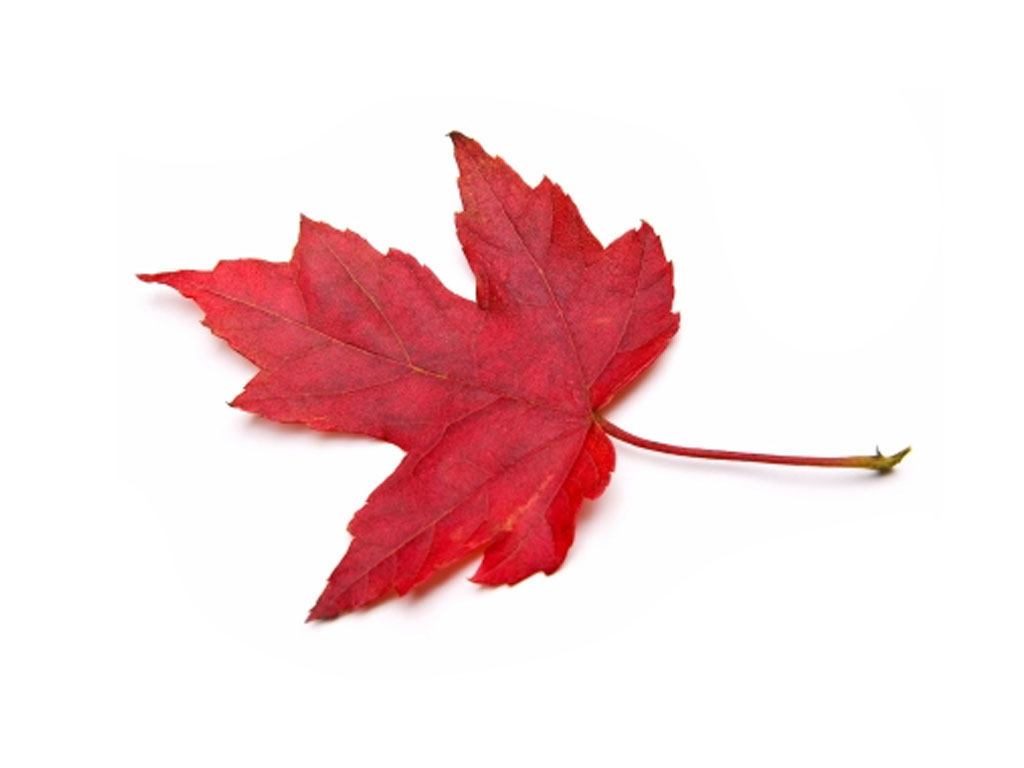 Maple Flavor Extract