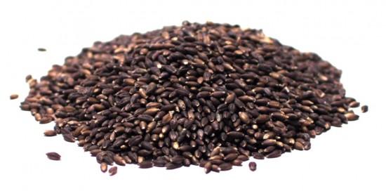 Barley, Black
