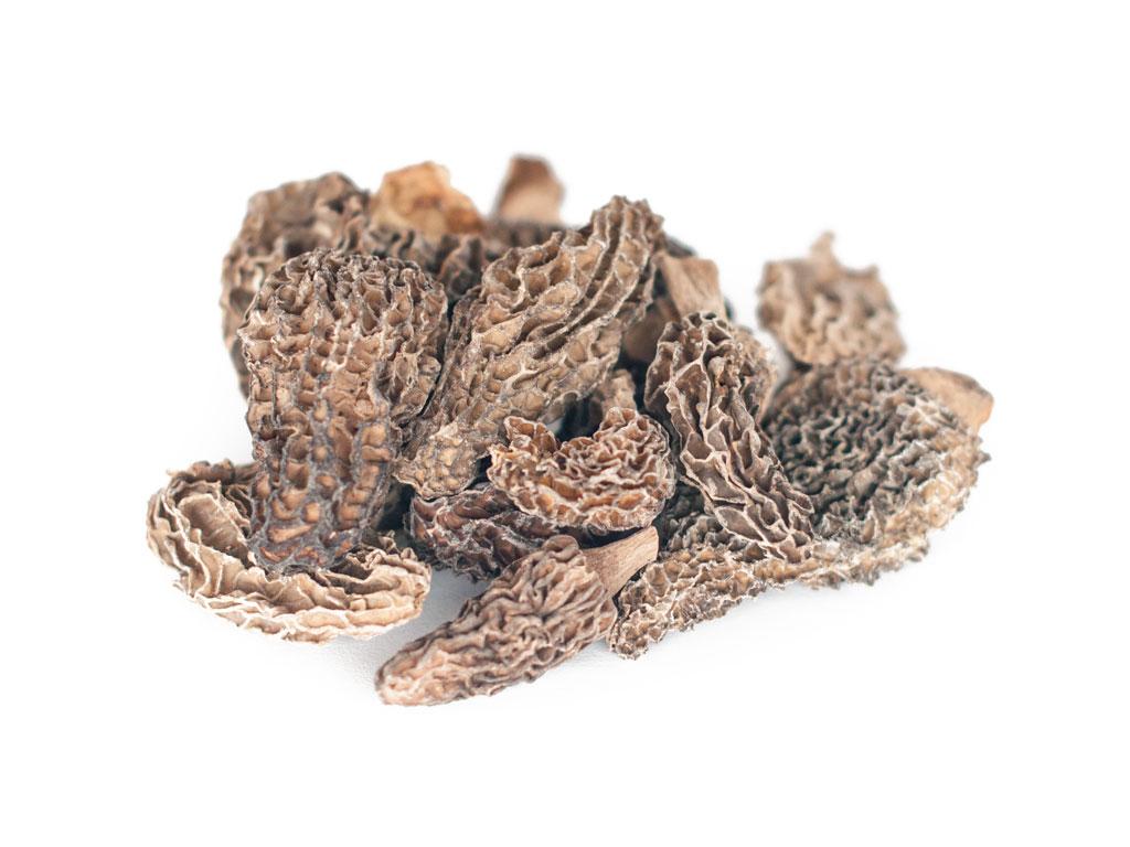 Mushroom - Morel
