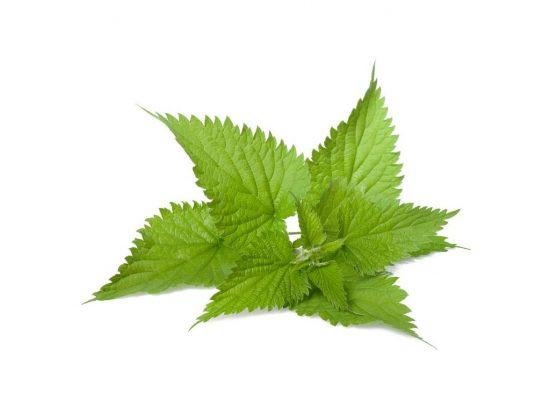 Nettle Leaf Extract, Quart